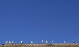 Seagulls at The Leman lake, Evian, France Stock Images