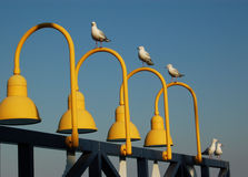 Seagulls on light fittings stock images