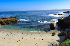 Seagulls Line Up Along Children`s Beach at La Jolla Cove in San Diego, California. Royalty Free Stock Photography