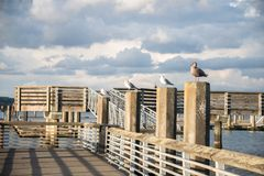 Seagulls Lined Up on Pilings of Public Fishing Pier. With dramatic sky and lighting of setting sun. Jetty Landing, Everett, Washington. Copy space stock photo