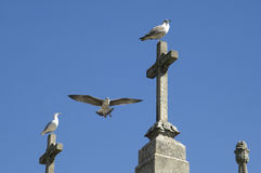Seagulls living on cemetery in Porto, Portugal Stock Photos