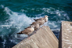 Seagulls in Llanes Stock Photos