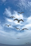 Seagulls in low flight over the sea near Thassos island Stock Photography