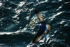 Seagulls madera Fotografia Royalty Free