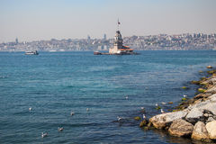 Seagulls and maidens Tower in Istanbul Royalty Free Stock Image