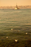 Seagulls and maidens Tower in Istanbul Royalty Free Stock Photos