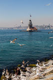 Seagulls and maidens Tower in Istanbul Royalty Free Stock Photo