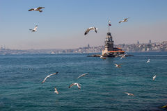Seagulls and maidens Tower in Istanbul Royalty Free Stock Photography