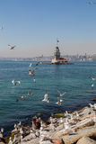 Seagulls and maidens Tower in Istanbul Stock Photo
