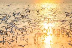 Seagulls med solnedgång på smällPu sätter på land Samutprakarn Arkivfoton