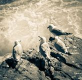 Seagulls Stock Photography