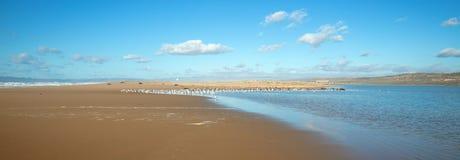 Seagulls między oceanu spokojnego i Santa Maria rzeką przy Rancho Guadalupe piaska diunami na centrali wybrzeżu Kalifornia usa obrazy stock