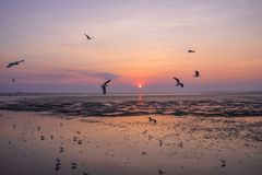 Seagulls migrate from Siberia, Mongolia, Tibet and China to Bang Pu, Samut Prakan Thailand. Bang Po Resort It is a popular holiday destination with one day or Royalty Free Stock Photography