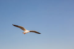 Seagulls, minimalism Royalty Free Stock Images