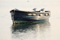 Seagulls on a moored boat Royalty Free Stock Image