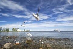 seagulls Morze zdjęcie stock