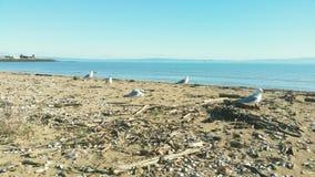Seagulls morzem Obrazy Royalty Free