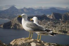 Seagulls in the mountains. At penyal de Ifach (Calpe, Costa Blanca Stock Photos
