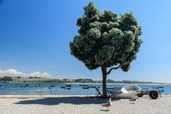 Seagulls na banku Douro rzeka z łodziami rybackimi w Porto, Portugalia fotografia stock