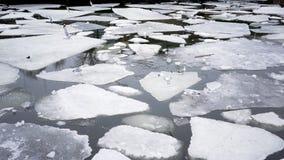 Seagulls na lodowatym jeziorze zbiory