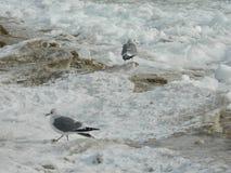 Seagulls na lodzie Obraz Royalty Free