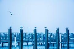 Seagulls na palowaniach Obraz Stock