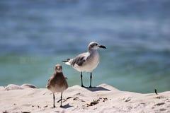 Seagulls na plaży zdjęcia stock