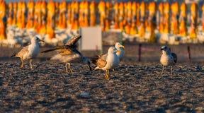 Seagulls na plaży