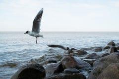 Seagulls na plaży Obrazy Royalty Free