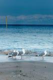 Seagulls na plaży przy Himi, Japonia Zdjęcia Royalty Free