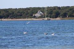 Seagulls na wodzie Obrazy Stock