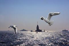 Seagulls nad Bosporus Fotografia Royalty Free