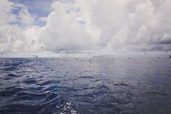 Seagulls nad fala ocean Ponury chmurny dzień fotografia stock