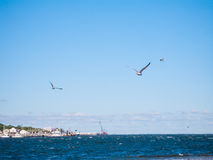 Seagulls Nad Piaskowatą haczyk zatoką Obrazy Stock