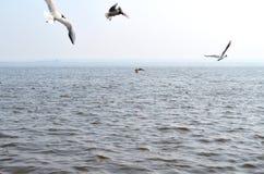 Seagulls nad rzeką obraz royalty free