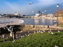 Seagulls nad rzeką, Athlone tama w tle Zdjęcie Royalty Free