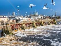 Seagulls nad rzeką, Athlone tama w tle Fotografia Stock