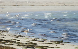 Seagulls near the beautiful mounds of sea waves Stock Photos