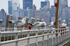 Seagulls near the seashore Royalty Free Stock Photos