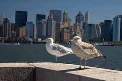 Seagulls and New York skyline Royalty Free Stock Photos