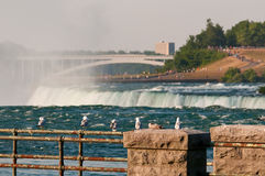 Seagulls at Niagara Falls. Seagulls sitting on rusty railing in Niagara Falls royalty free stock photos