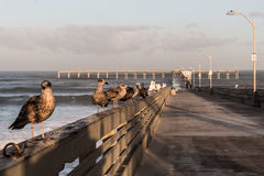 Seagulls on the Ocean Beach Fishing Pier Royalty Free Stock Photos