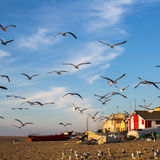 Seagulls on ocean beach in the fishing village. Nature. Stock Photography