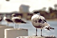 Seagulls oceanem obraz royalty free