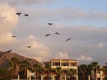 Seagulls- och bergsemesterort i bakgrunden på Fujairah i Förenade Arabemiraten Fotografering för Bildbyråer