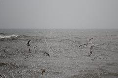 Seagulls och hav på vinter Fotografering för Bildbyråer