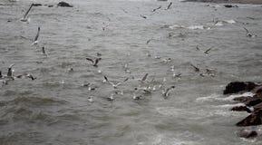 Seagulls och hav på vinter Arkivfoton