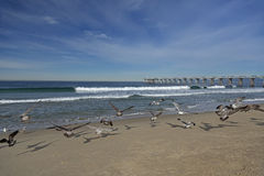Seagulls och pir på den Hermosa stranden Arkivbilder