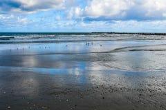 Seagulls och snäppor på en öppen strand Royaltyfri Bild