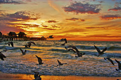 Seagulls och solnedgångar Arkivbild